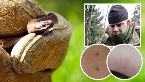 Helsingin yliopiston tutkija Jarmo Saarikivi kertoo, että on harvinaista, että käärme puree vedessä.