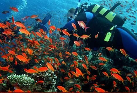 Punainenmeri on sukeltajan paratiisi ja Sharm el Sheikh sukelluskohteiden huippu.