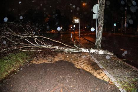 Kaatunut puu Helsingin Hietaniemessä.