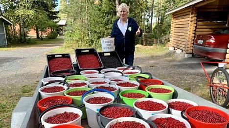 Aimo Karppinen on kerännyt tänä syksynä 200 ämpärillistä puolukoita.