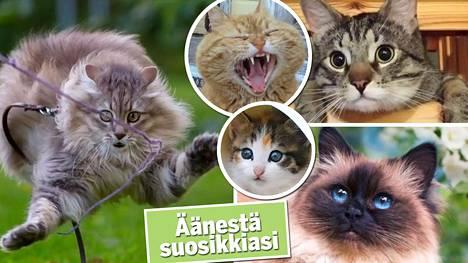 Äänestä kissakuvakisan kivoin kuva!