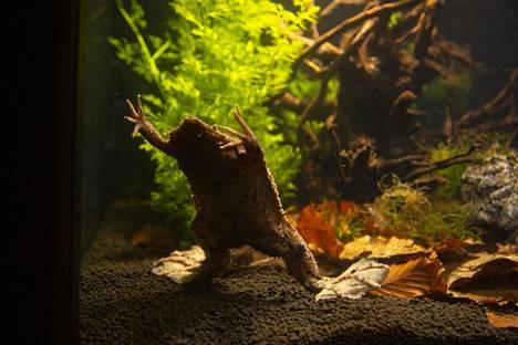Korkeasaaren uusi sammakko.