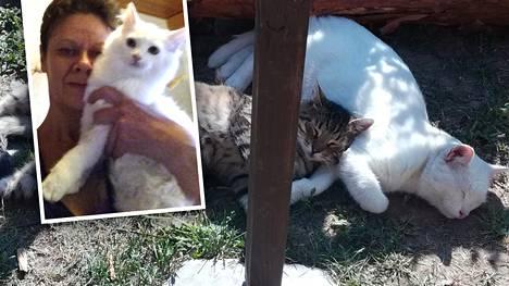 Kodittomia kissoja pelastava Johanna ilahtui kutsusta Linnaan – olisiko sinulla tarjota kotia tälle hurmaavalle kissakaksikolle?