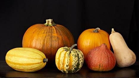Edessä (vas.) spagettikurpitsa, koristekurpitsa, hokkaidokurpitsa, takana (vas.) jättikurpitsa, halloween-kurpitsa ja sivulla pitkulainen myskikurpitsa.