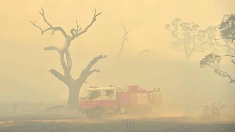 Uhanalaisia hiiruleita kuoli Australian maastopalojen savuihin.