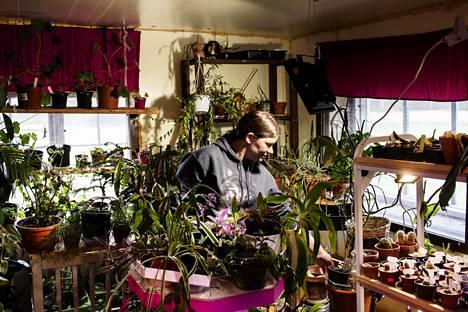 Yksi iso projekti olisi laskea Sinin kasvien määrä. Neljätuhatta on aika lähellä totuutta.