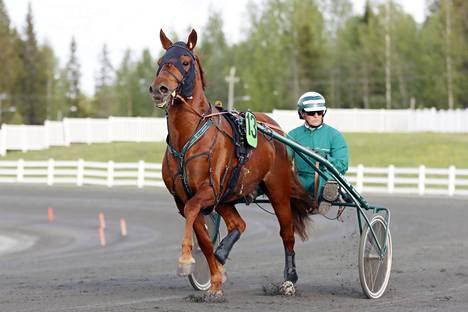Lissun Eerikki on nousset Pekka Luukkosen taitavissa käsissä suomenhevosten terävimmälle huipulle.
