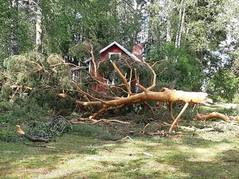 Myrskytuhoja Tavisaaressa Pohjois-Savossa.