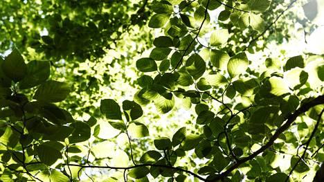 Kysely: Valtaosa suomalaisista pitää elämäntapaansa ympäristön kannalta kestävänä
