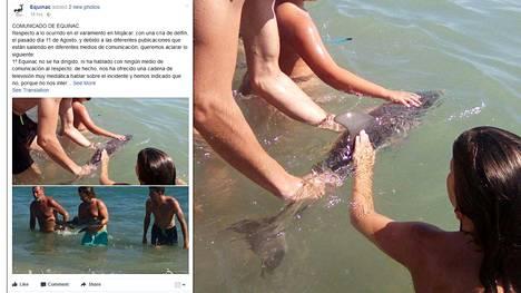 Uteliaat uimarit halusivat väkisin samaan kuvaan delfiininpoikasen kanssa.
