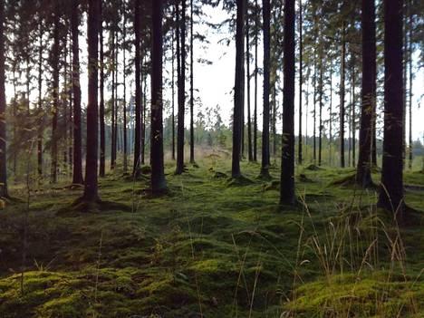 Metsän värikatsaus Kuusankoskelta.