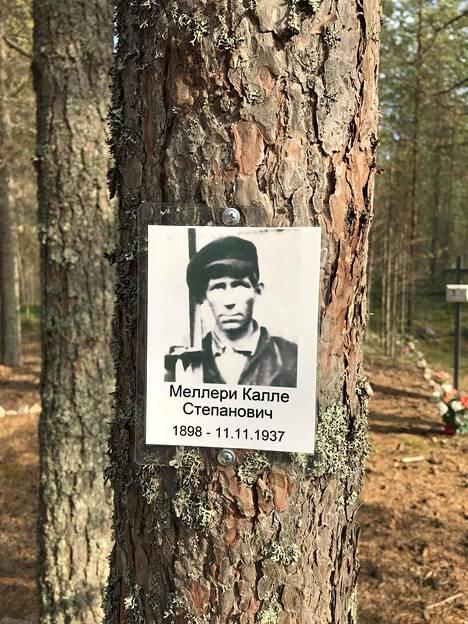 Kalle Mellerin kuva on ripustettu yhteen puuhun Sandarmohin mäntykankaalla.