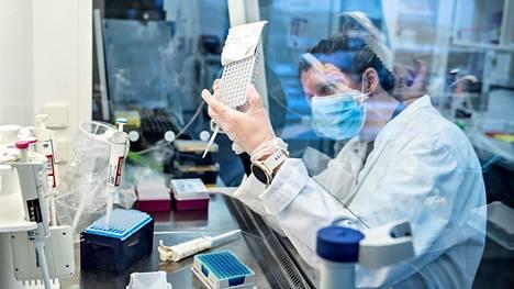Koronaviruksen uusia muunnoksia etsitään sekvensoimalla eli selvittämällä potilasnäytteistä viruksen koko perimä tai osa siitä. Kuvassa Aalborgin yliopiston tutkija etsii viruksen brittimuunnosta Tanskassa tammikuussa.