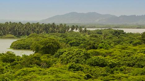 Amazonin sademetsäaluetta Rio Negro -joen varrella Brasiliassa. Brasiliassa on todettu toistaiseksi kolmanneksi eniten koronatartuntoja koko maailmassa.