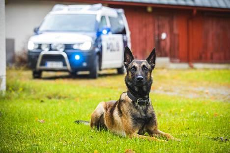 Poliisikoira Viksu on koulutettu henkilöetsintään, esine-etsintään, jäljestykseen, tottelevaisuuteen, ja suojeluun.