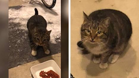 """Reksu-kissa karkasi äkkiarvaamatta – kaksi vuotta myöhemmin naapurin ovella odotti iloinen yllätys: """"Se oli kauhean onnellinen, että löysi kotiinsa"""""""