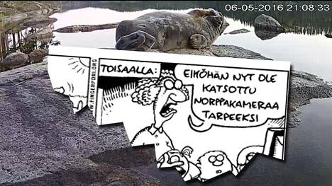 Norppalive kohtasi Fingerporin päivän Helsingin Sanomissa.