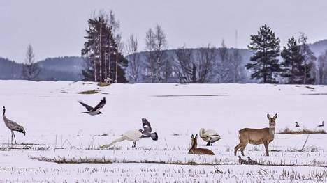Tunnistatko kaikki kuvassa olevat eläimet?