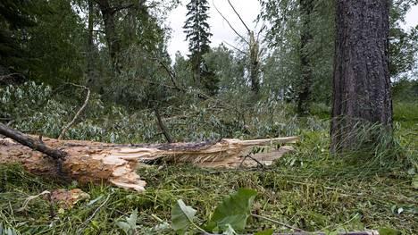 Suomea kurittanut Päivö-myrsky kaatoi puita Pohjois-Karjalassa, jossa 21 000 ihmistä on ilman sähköjä.