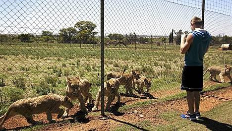 Eemeli Salomäki ja kumppanit pääsivät tekemään tuttavuutta leijonien kanssa.