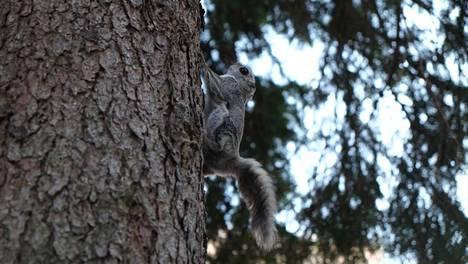 Jarno Alastalo näki ikkunastaan liito-oravan.