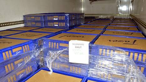 Tässä ne ovat: 42 000 kappaletta vadelmakakkuja, jotka jaetaan Jari Sillanpään 50-vuotiskonserttiin saapuville katsojille Helsingin Olympiastadionilla.