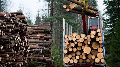 Vientikiellon ei uskota vaikuttavan suuresti Suomen metsäteollisuuteen.