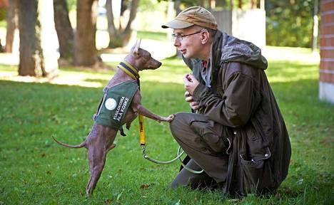 Midas-terrierin kouluttaminen viralliseksi kuulokoiraksi kesti vuoden. Nyt Timo Heinolla on lupa ottaa koira mukaan kaikkialle.