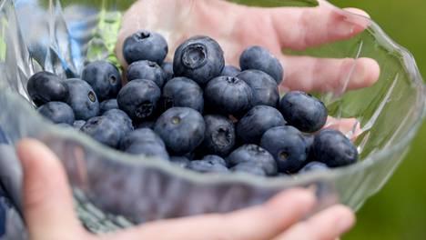 Uuden tutkimuksen mukaan mustikat voivat auttaa vähentämään vaarallista sisäelinten rasvaa.