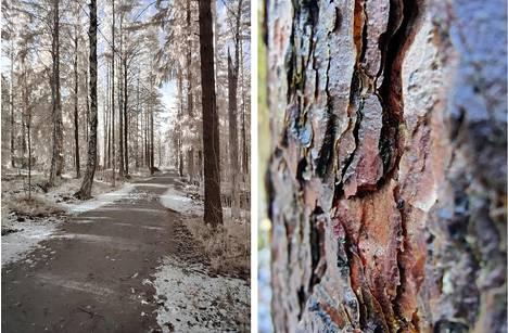 Vasemmalla on OnePlus 8 Prolla otettu kuva metsäpolusta Photocrom-toiminnolla. Oikealla puolestaan on kaarnaa kameran supermakrolla kuvattuna.