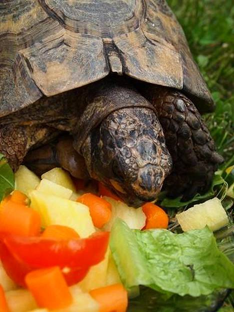 Nikelle maistuu lounas, jossa on tarjolla luonnonkasveja ja vihanneksia eri muodoissa.