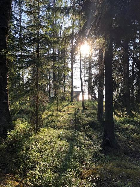 Rannalle kuljetaan metsätietä.