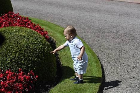 Oscar tutkii pensaita.