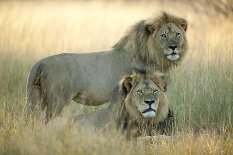 Cecil ja Jericho yhdessä kuvattuna.