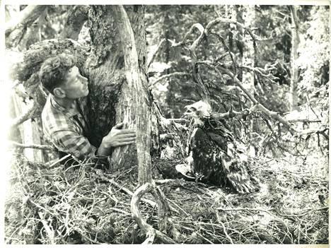 Nuori Linkola mielipuuhissa. Luonnonrakkaus kumpusi lintuharrastuksesta.