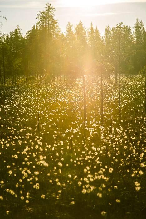 Osa kommentoijista muistuttaa, että vaikka jotkut eurooppalaisetkaan eivät tunnu tietävän Suomesta mitään, tietämystä löytyy välillä paljon ja yllättävistä paikoista. Jos joku jotain Suomesta tietää, tietää hän yleensä puhtaan ja kauniin luonnon.