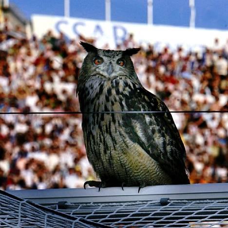 Itse Bubi Olympiastadionilla kesäkuussa 2007.