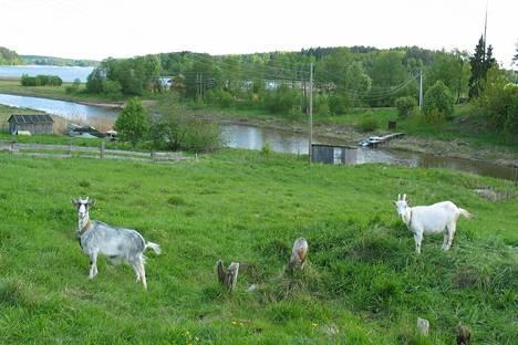 Uusi kaupunki tulisi suunnitelmien mukaan Kurkijoelle, noin kymmenen kilometrin päähän Suomen rajasta.