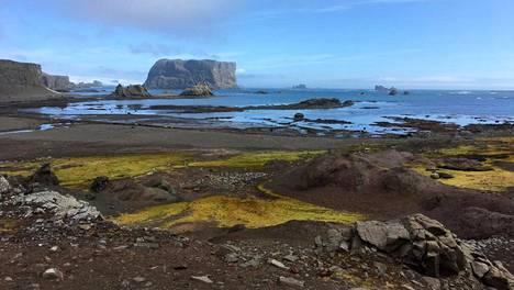 Etelämantereelta löytyi koronavirusta.