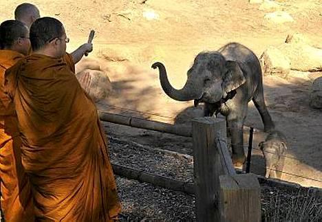 Mali sai erityisen siunauksen, kun buddhalaiset munkit kastoivat sen.