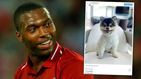 Daniel Sturridgen koira varastettiin.
