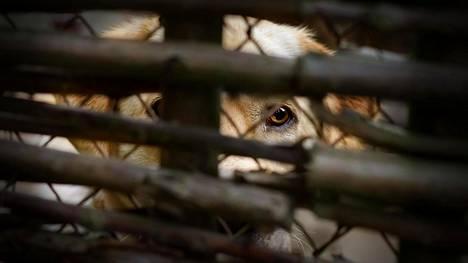 Eläinsuojelu saa yhä enemmän ilmoituksia: Ihmiset kouluttavat koiriaan julmasti