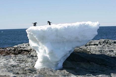 Adelenpingviinejä sulavan jäälautan päällä Cape Denisonin rannikolla.