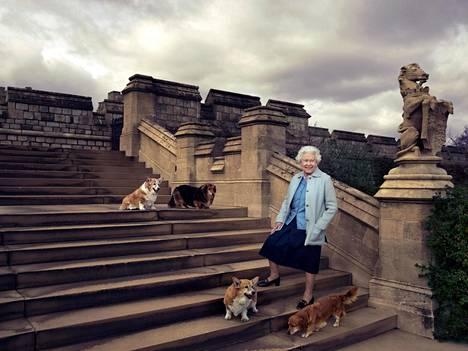 Corgien ja dorgien lisäksi myös labradorinnoutajat ovat lähellä kuningatar Elisabetin sydäntä.