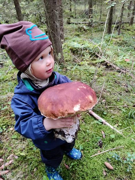 """2-vuotias Sisu oli retken Kristoffer Kolumbus, joka eksyessään löysi """"sienimörön""""."""