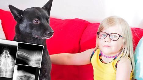 Koira Alistaa Toista Koiraa