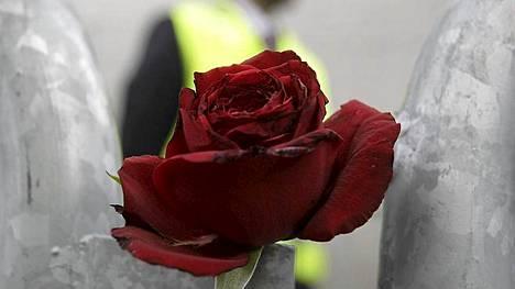 Oslon oikeustaloa ympäröivään suoja-aitaa oli kiinnitetty ruusuja Norjan joukkomurhan uhrien muistoksi.