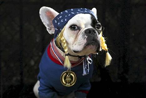 Ranskanbulldoggi Lula oli puettu Yhdysvaltain olympiajoukkueen jäseneksi.