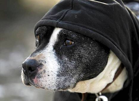 Koiralle puettiin lämmintä päälle puolalaisessa eläinkodissa Varsovassa torstaina.