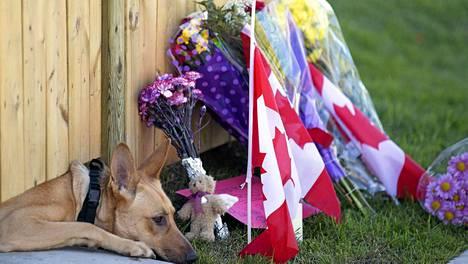 Ottawan ammuskelussa kuolleen sotilaan koira kurkistaa kotipihansa aidan alta. Sen menehtyneen isännän muistoksi on tuotu runsaasti kukkia ja Kanadan lippuja.